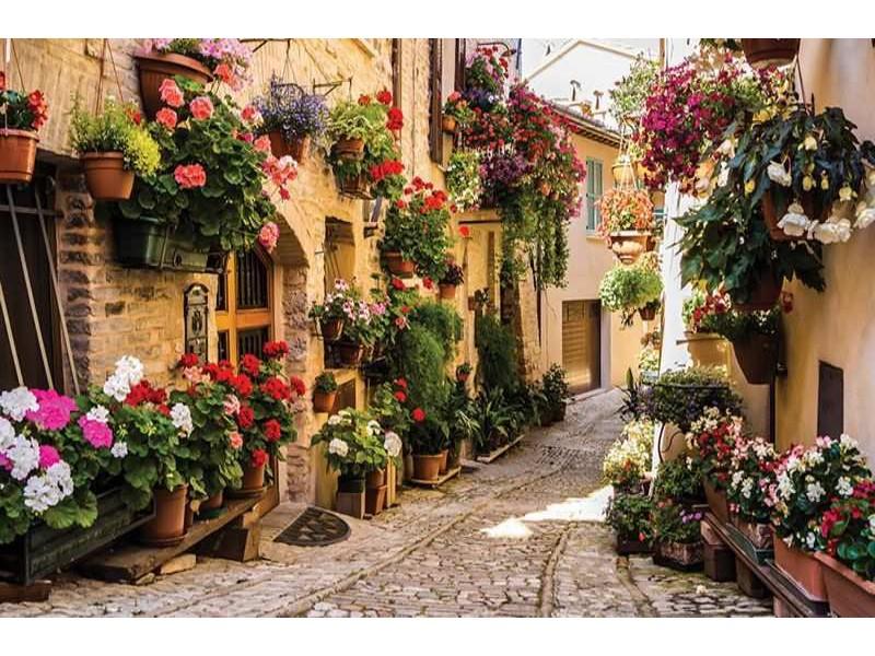 1339V8 - Fototapet gata med blommor