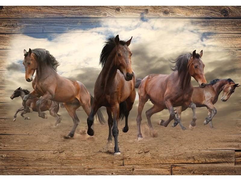 10083V8 - Fototapet galopperande arabiska hästar