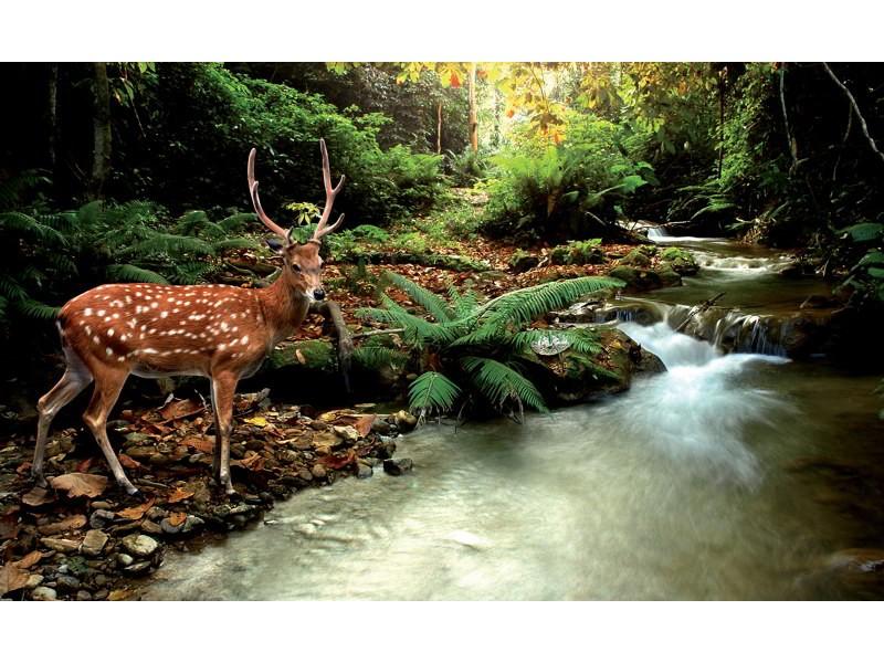 147V8 - Fototapet hjort vid vattendrag i skogen