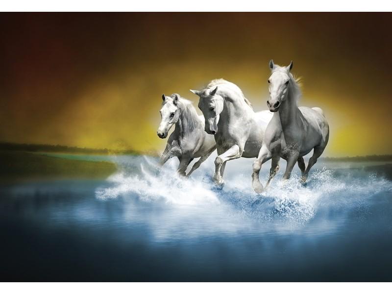425V8 - Fototapet vita hästar