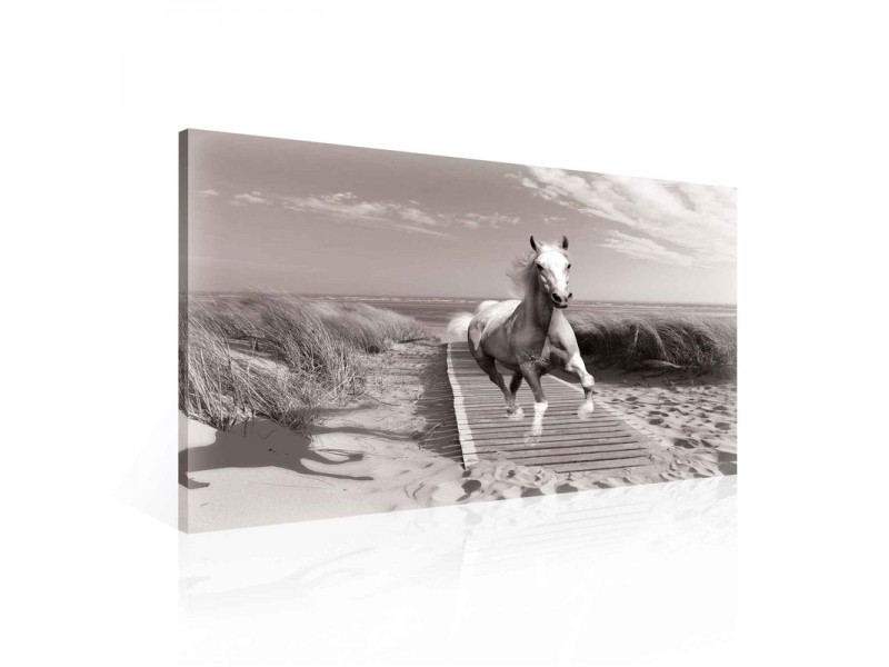 Horse Beach Grey Canvastavla (PP2307O1)