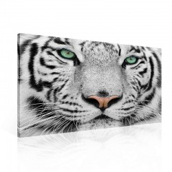 Tiger Black White Canvastavla (PP1364O1)