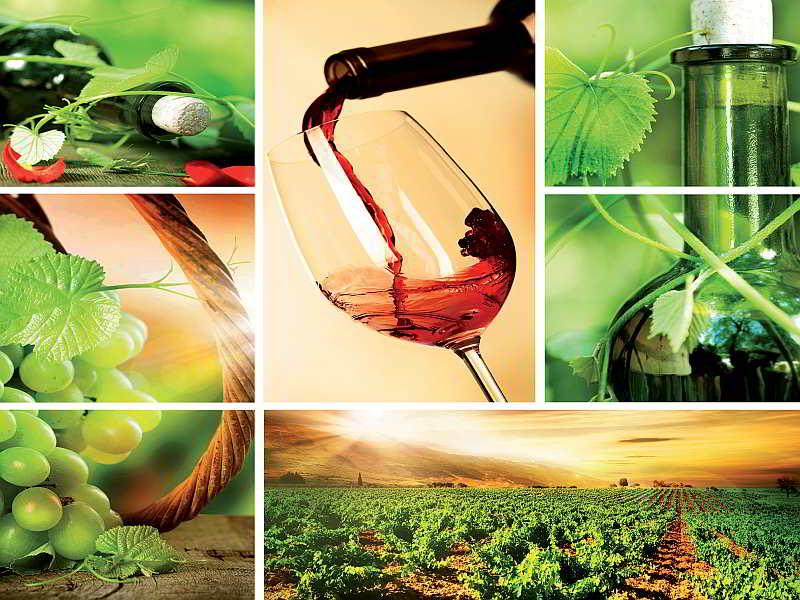 104WM - Fototapet Vin och Vindruvor