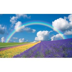 018V8 - Fototapet regnbåge över lavendel fält
