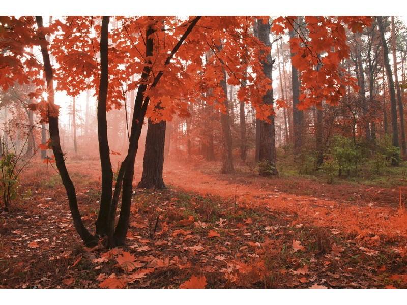 FOTOTAPET EASY UP MISTY FOREST