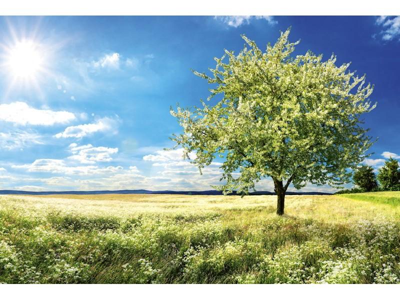 FOTOTAPET EASY UP BLOSSOM TREE