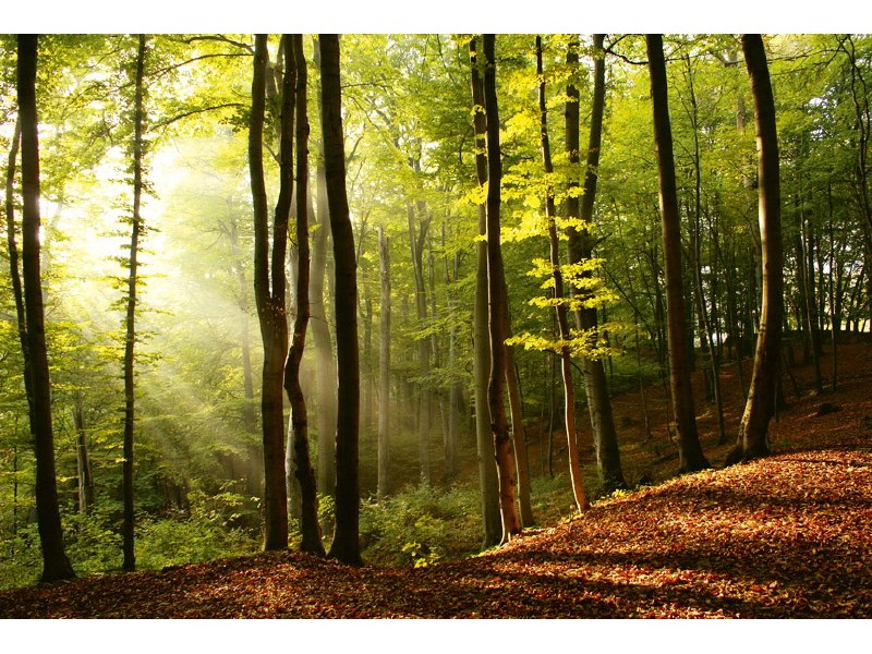 FOTOTAPET EASY UP FOREST