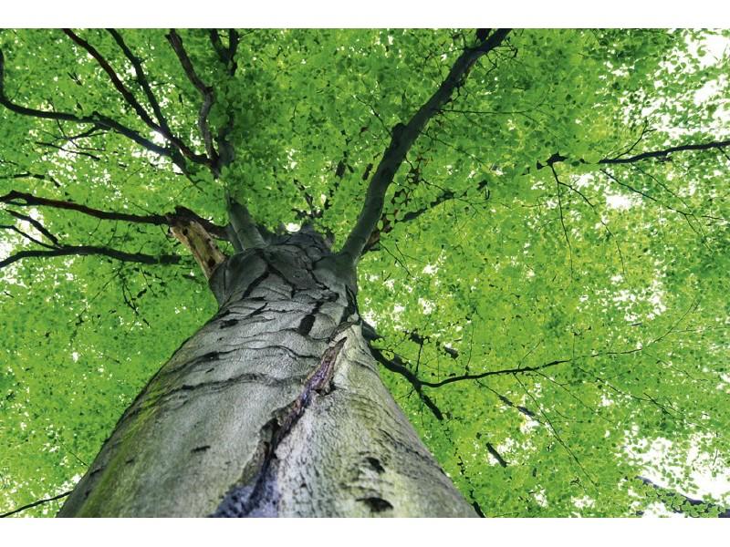 FOTOTAPET EASY UP TREETOP