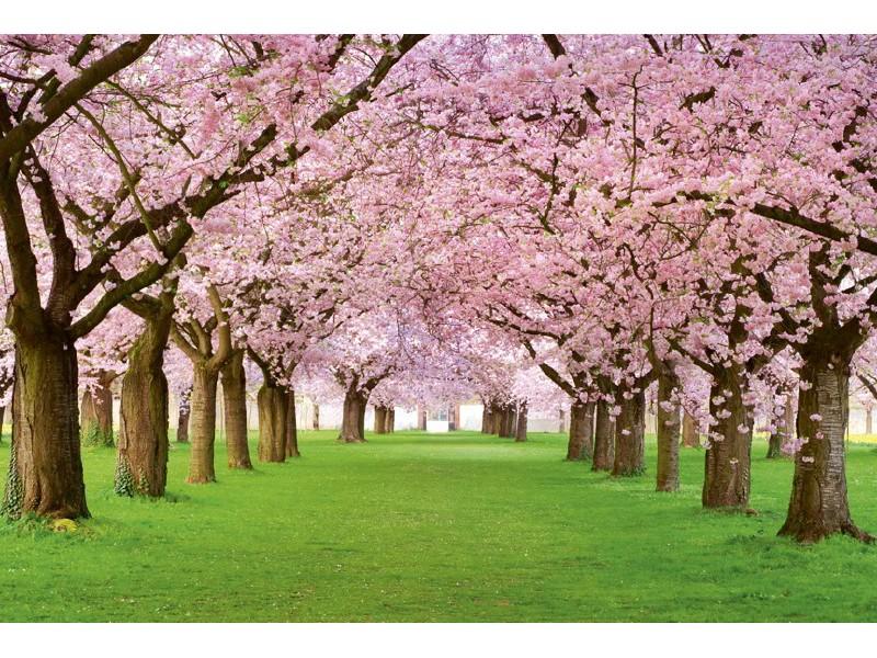 FOTOTAPET EASY UP CHERRY TREES