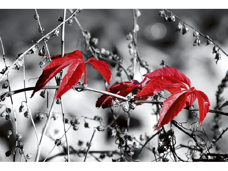 FOTOTAPET EASY UP RED LEAVES ON BLACK