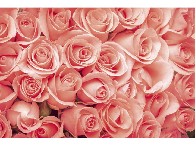 FOTOTAPET EASY UP ROSES