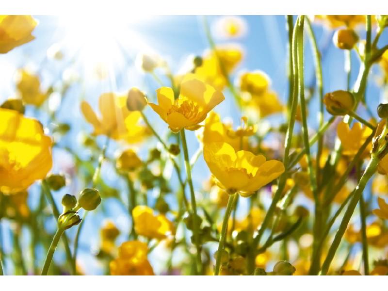 FOTOTAPET EASY UP YELLOW FLOWERS