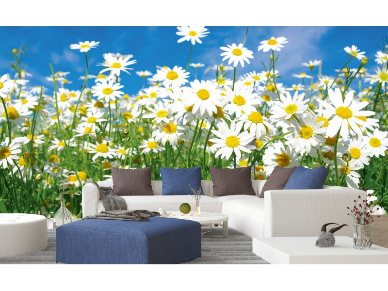 FOTOTAPET EASY UP DAISIES