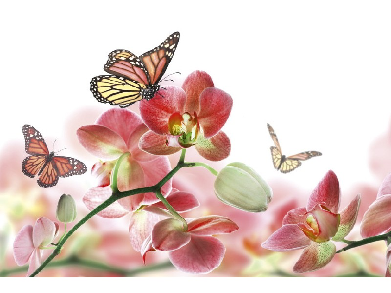 FOTOTAPET EASY UP ORCHIDS AND BUTTERFLY