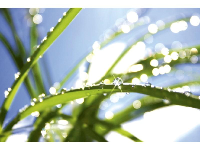 FOTOTAPET EASY UP GRASS
