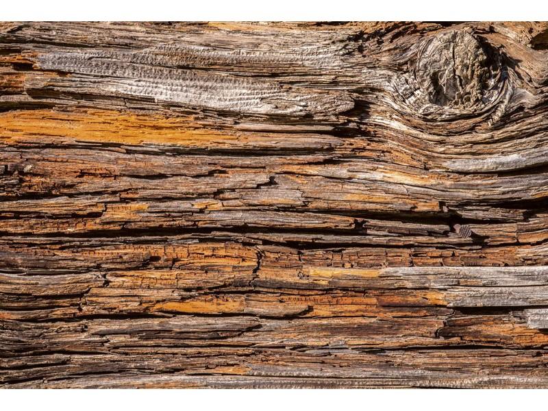 FOTOTAPET EASY UP TREE BARK
