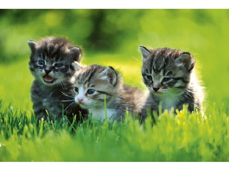 FOTOTAPET EASY UP KITTENS