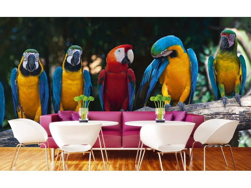 FOTOTAPET EASY UP COLOURFUL MACAW