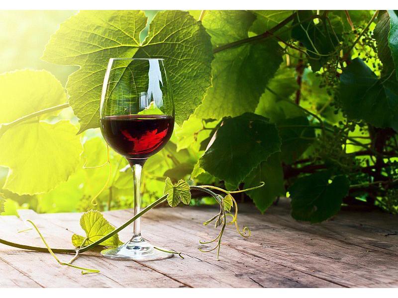 M0830 - Fototapet glas med rött vin i vingården