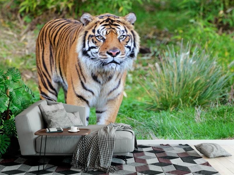 Fototapet Sumatran Tiger