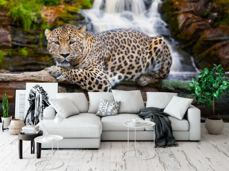 Fototapet Resting Jaguar