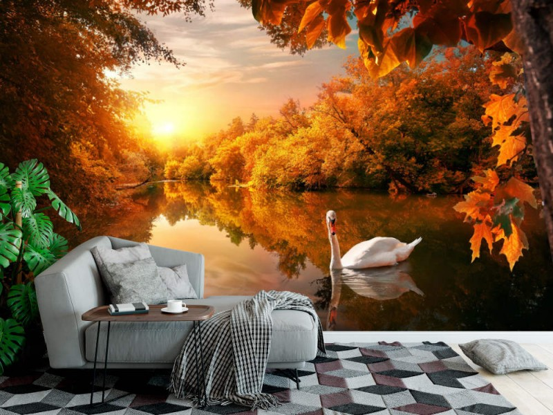 Fototapet White Swan On Autumn Pond