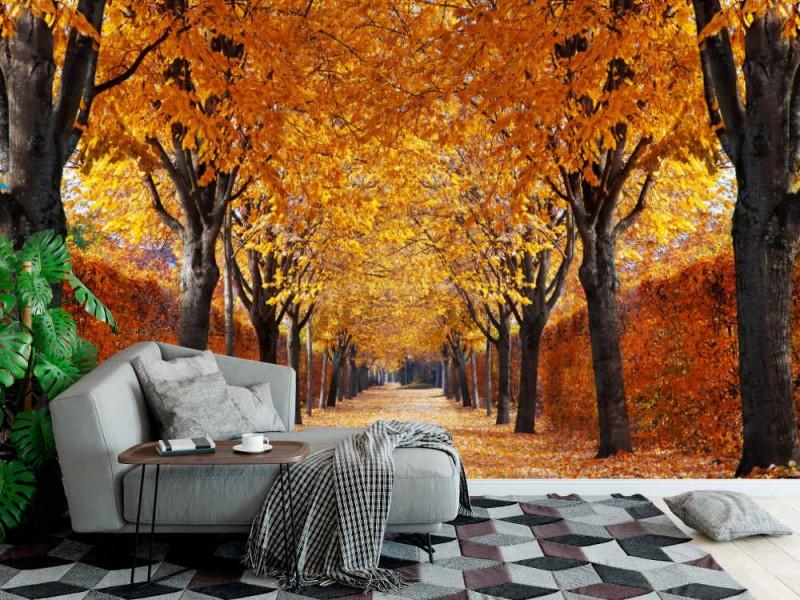 Fototapet Autumn Alley