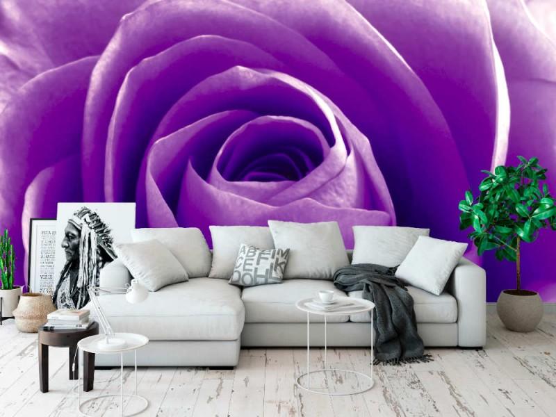 Fototapet violetta rosenblad (11237532)