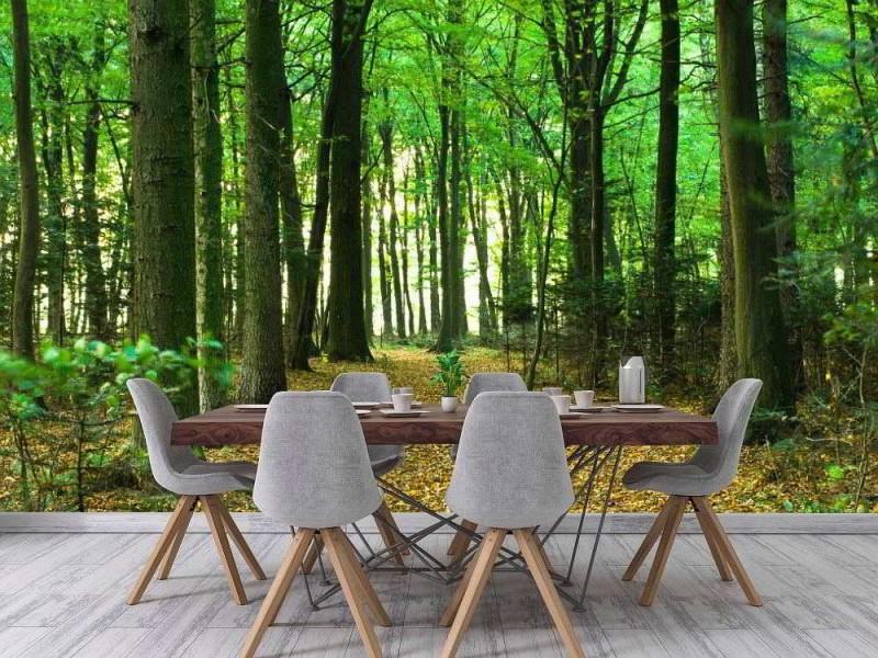 Fototapet grön skog på sommaren