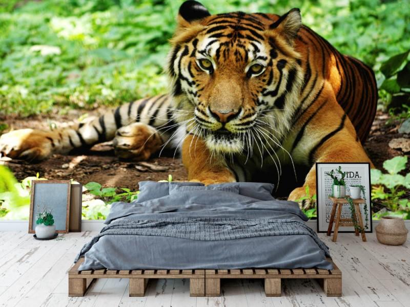 Fototapet Indochina Tiger