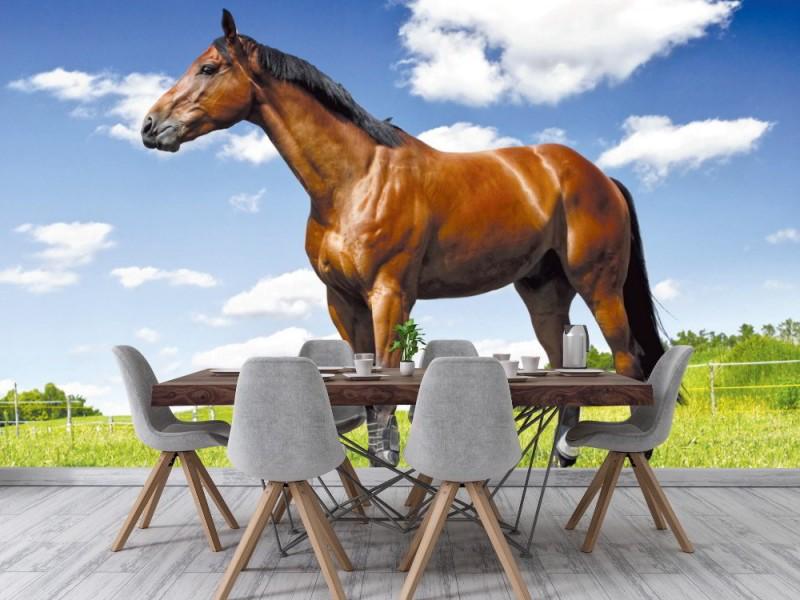 Fototapet häst på ängen (14559801)