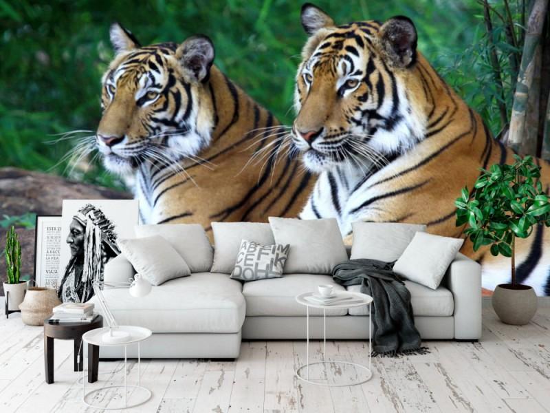 Fototapet Two Tigers