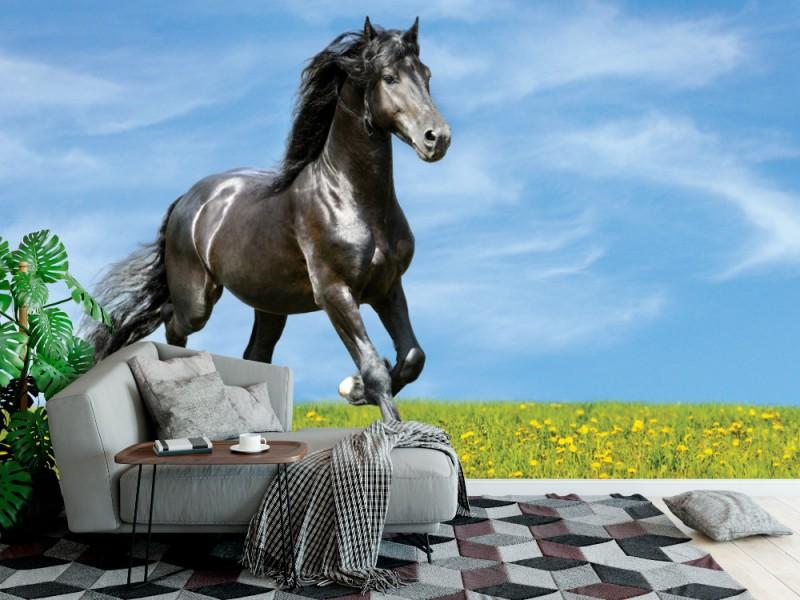 Fototapet svart häst kör trav på ängen (15612224)