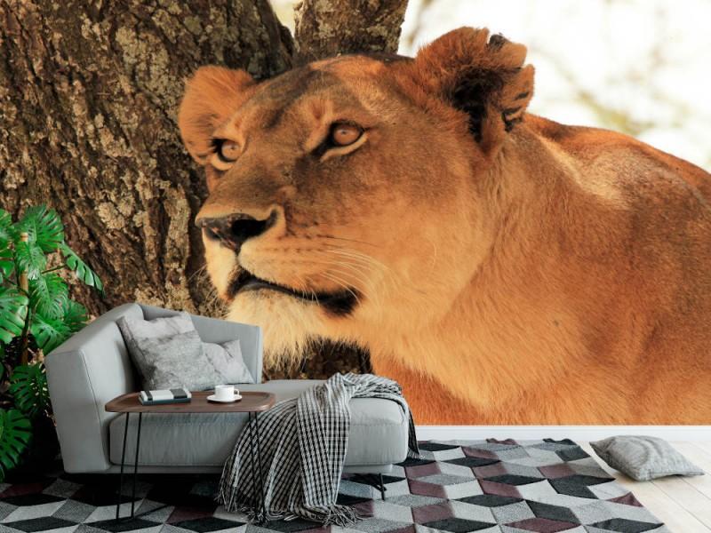Fototapet Portrait Of A Lioness