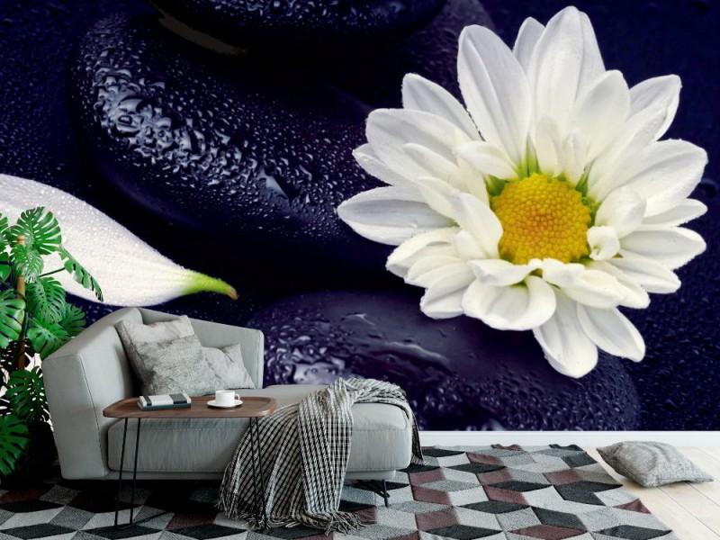 Fototapet spa stilleben med vita blommor (16412374)