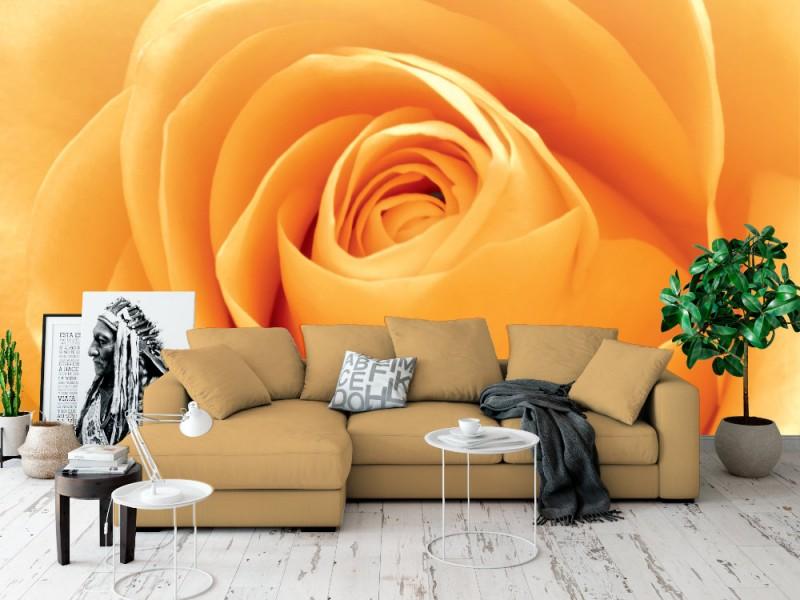 Fototapet orange rosenblad (21285922)