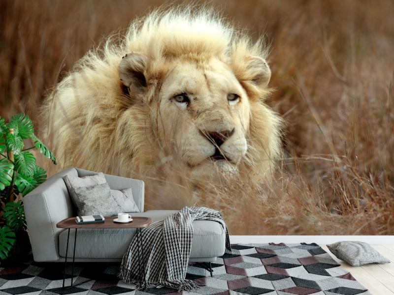Fototapet vitt manligt lejon (29885296)