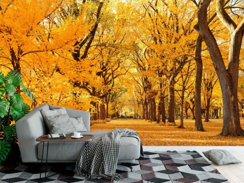 Fototapet Central Park Autumn