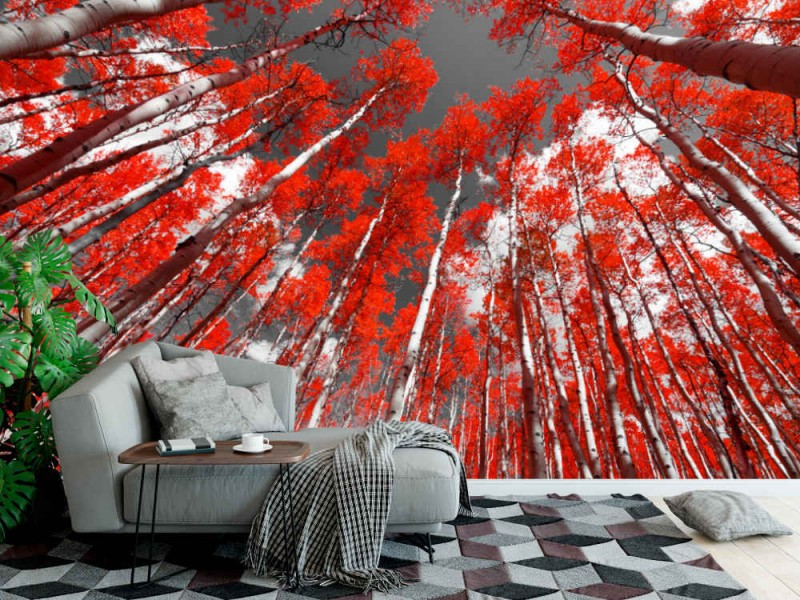 Fototapet Red Trees Forest
