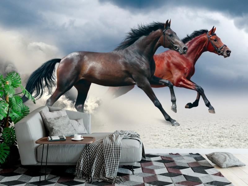 Fototapet två hästar som kör i en galopp längs det sandiga fältet (37402704)