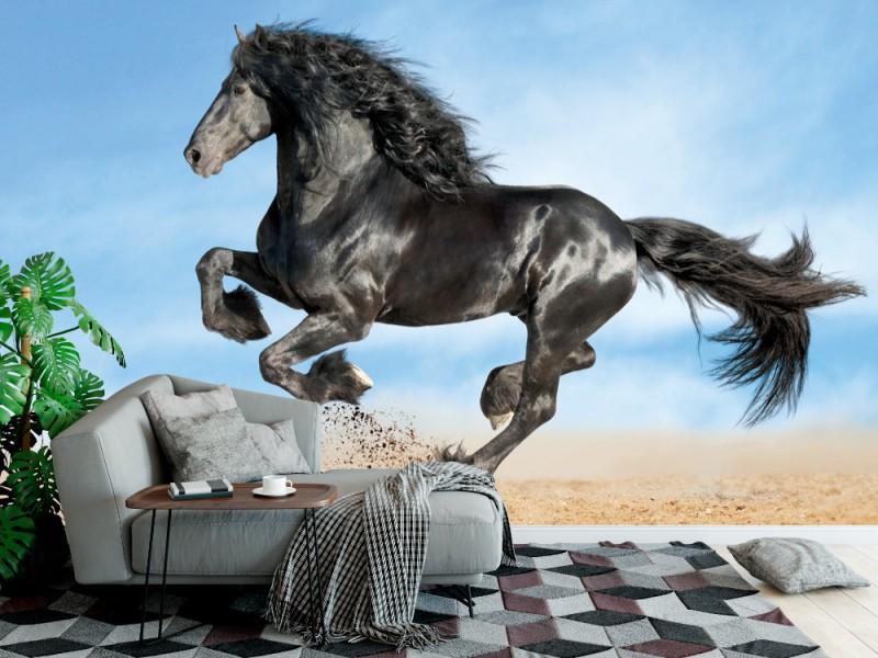 Fototapet svart frisisk häst spring galopp (39369008)