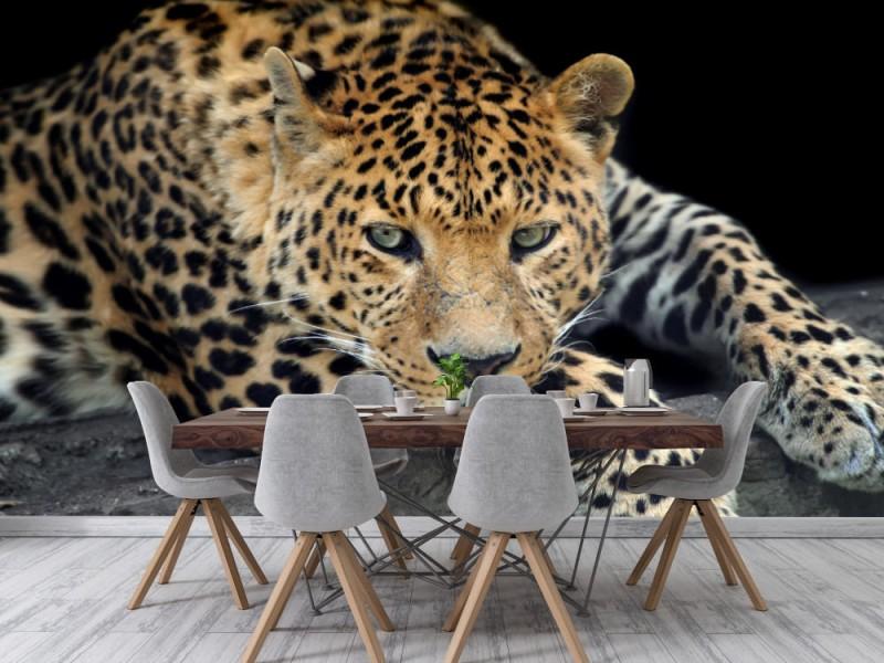 Fototapet Wild Leopard