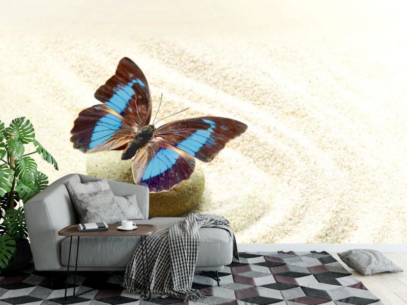 Fototapet butterfly Prepona Laerte på sanden (41978393)