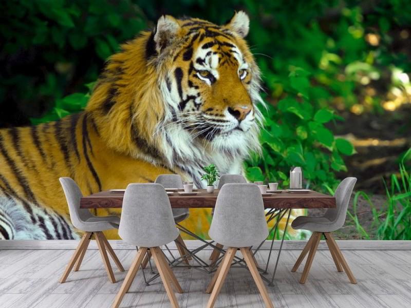 Fototapet Amur tiger