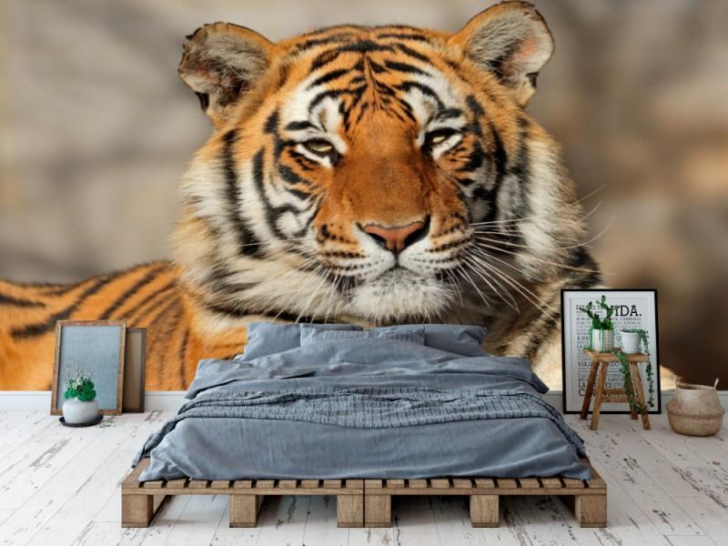 Fototapet Portrait Of A Bengal Tiger