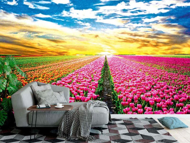 Fototapet tulpanfält i Nederländerna