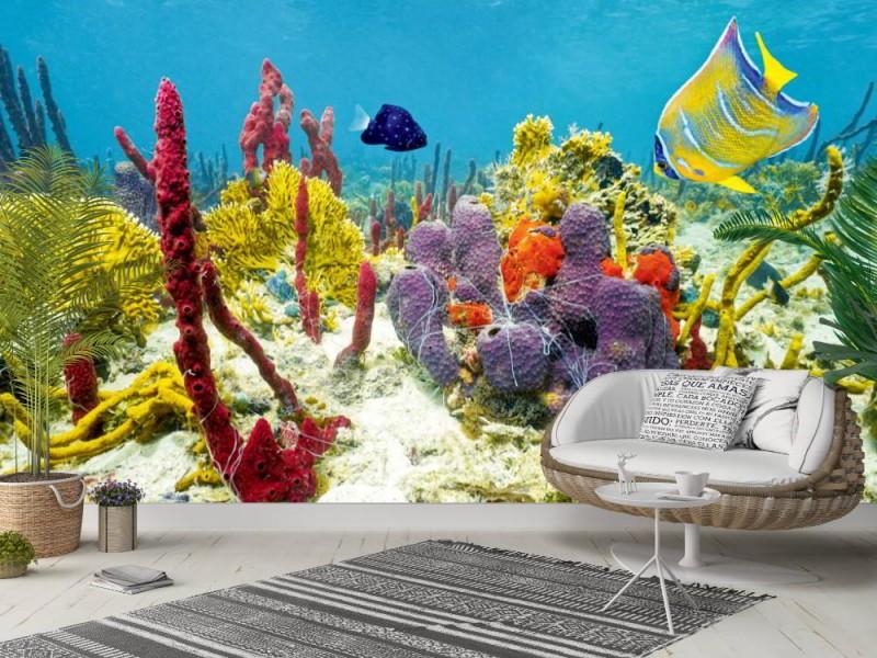 Fototapet färger av undervattensliv i Karibien (50993995)
