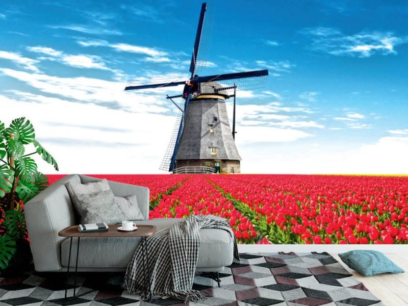 Fototapet vibrerande tulpanfält med holländsk väderkvarn