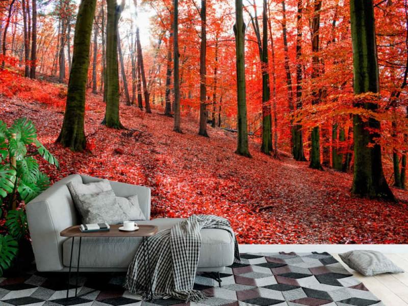Fototapet Sonian Forest
