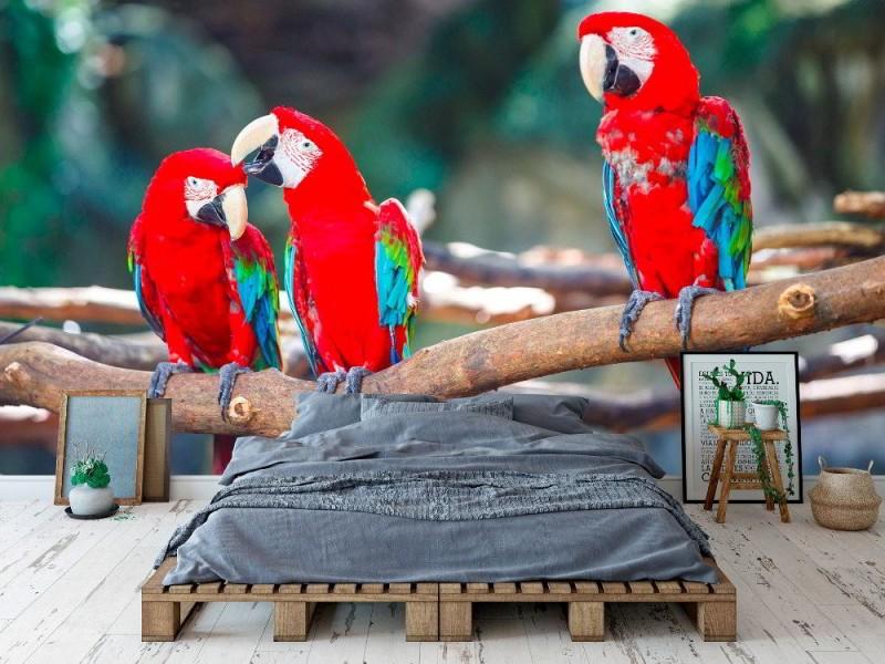 Fototapet med ara papegojor på stock